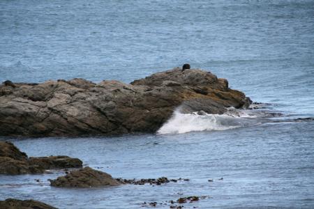 Seals coast train