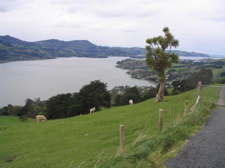 Otago Penisnsula