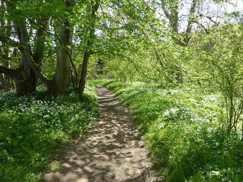 St cuthberts way path along tweed