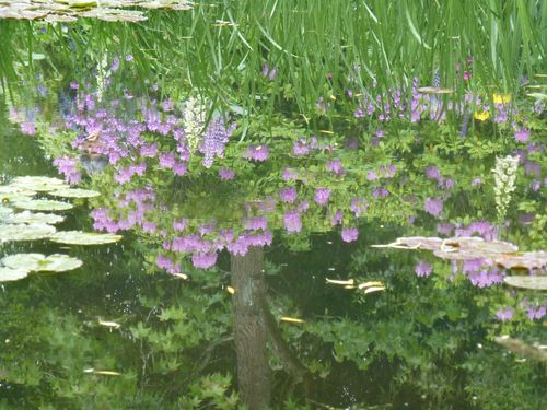 Lilly pond reflection