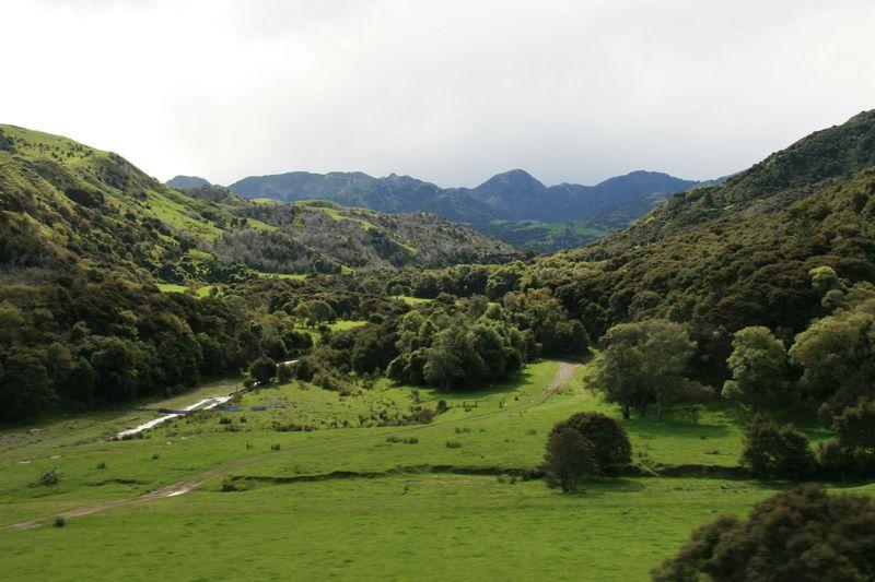 NZ - fields and hills