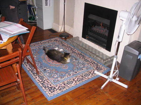 Cat_on_the_mat_1
