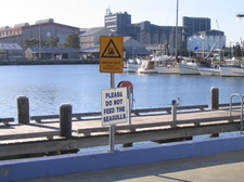 Seagull_sign_fishermans_coop