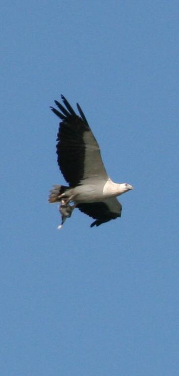 Eagle_and_prey